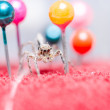 Spider and pins — Stock Photo