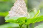 自然の中で小さな蝶 — ストック写真
