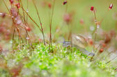 Snails and moss — Stock Photo