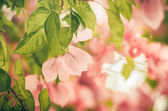 Paper flowers or Bougainvillea vintage — Stock Photo