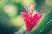 Czerwony kwiat — Zdjęcie stockowe