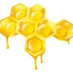 Honingraat met druipende honing — Stockvector
