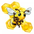 Bee and honeycomb — Stockvectorbeeld