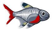 X-ışını tetra çizgi film balık — Stok Vektör