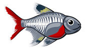 X-ray tetra cartoon fish — Vettoriale Stock