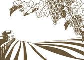 Vineyard Grapevine Farm Illustration — Stock Vector