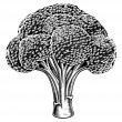 Vintage retro woodcut broccoli — Vecteur #34039439