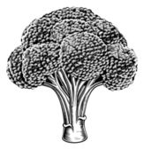 Vintage retro woodcut broccoli — Vecteur