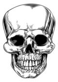 Vintage skull illustration — Vecteur