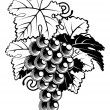 Grapes on Grapevine — Imagen vectorial