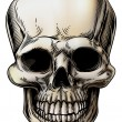 Human Skull Illustration — Stockvectorbeeld