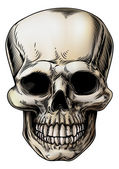 Human Skull Illustration — Stockvector