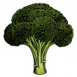 Broccoli vintage woodcut illustration — Vector de stock
