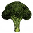 broccoli vintage houtsnede illustratie — Stockvector  #43676867