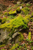 Moss on stone in forest — Stock Photo