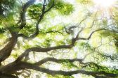 árbol grande — Foto de Stock