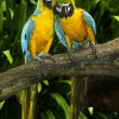 Macaw — Stock Photo #16801025
