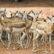 Group of deer - Stock Photo