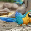 Macaw — Stock Photo #16805955