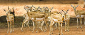 Group of deer — 图库照片