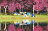 Landscape of pink garden — Stock Photo