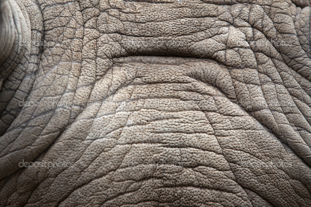 Rhino skin texture. — Stock Photo © anekoho #16807657