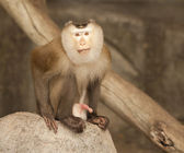 Portrait of yellow monkey — Stock Photo