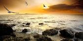 Ptak sylwetka zachód słońca i morza — Zdjęcie stockowe