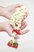 Thai culture jasmine in hand — Stock Photo