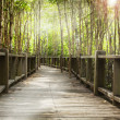 Wood bridge - Stock Photo