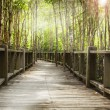 Wood bridge — Stock Photo