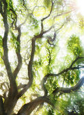 Stort träd — Stockfoto