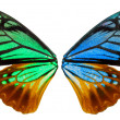 Wing of an butterfly — Stock Photo