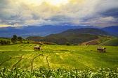 Campo de arroz verde exuberante — Fotografia Stock