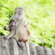 Monkey family — Stock Photo #31176113