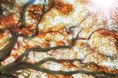 Big tree — Стоковое фото