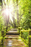 Moss around the wooden walkway in rain forest — Stock Photo