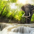 Stock Photo: Erawan Waterfall with an elefhant