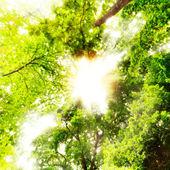 Big tree with sun light — Stock Photo