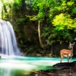 Stock Photo: Level five of Erawan Waterfall