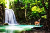 Level five of Erawan Waterfall — Stockfoto