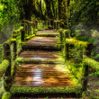 Beautiful rain forest at ang ka nature trail — Stock Photo