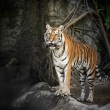 Stock Photo: Royal Bengal tiger
