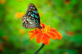 Blue butterfly fly — Stock Photo
