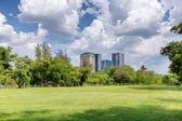 Central park a día soleado — Foto de Stock