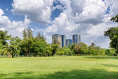 Central park am sonnigen tag — Stockfoto