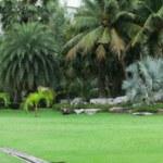 Green city park — Stock Photo #51270245