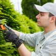 Stock Photo: Gardener pruning an hedge