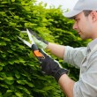 Gardener pruning an hedge — Stock Photo #27203523