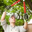 Gardener pruning a tree — Stock Photo #27203561